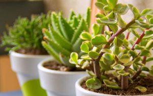 فروشگاه اینترنتی فروش گل و گیاه ساختمانی و زینتی